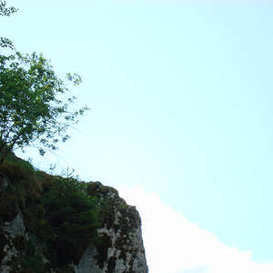 Image 28 - Jean-Pierre sergent, Water, Rocks, Trees & Flowers, 2015, JP Sergent