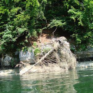 Image 15 - Jean-Pierre sergent, Water, Rocks, Trees & Flowers, 2015, JP Sergent