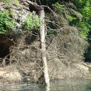 Image 14 - Jean-Pierre sergent, Water, Rocks, Trees & Flowers, 2015, JP Sergent