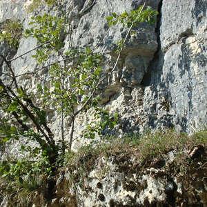 Image 158 - Jean-Pierre sergent, Water, Rocks, Trees & Flowers, 2015, JP Sergent