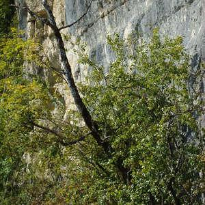 Image 159 - Jean-Pierre sergent, Water, Rocks, Trees & Flowers, 2015, JP Sergent
