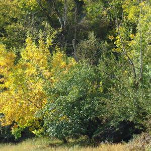 Image 160 - Jean-Pierre sergent, Water, Rocks, Trees & Flowers, 2015, JP Sergent
