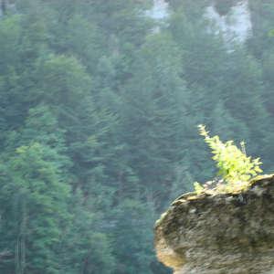 Image 115 - Jean-Pierre sergent, Water, Rocks, Trees & Flowers, 2015, JP Sergent
