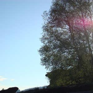 Image 120 - Jean-Pierre sergent, Water, Rocks, Trees & Flowers, 2015, JP Sergent