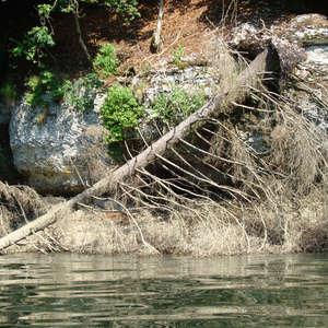 Image 13 - Jean-Pierre sergent, Water, Rocks, Trees & Flowers, 2015, JP Sergent