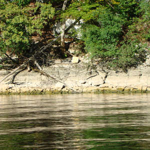 Image 126 - Jean-Pierre sergent, Water, Rocks, Trees & Flowers, 2015, JP Sergent