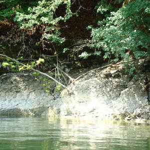 Image 18 - Jean-Pierre sergent, Water, Rocks, Trees & Flowers, 2015, JP Sergent