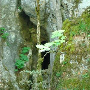 Image 5 - Jean-Pierre sergent, Water, Rocks, Trees & Flowers, 2015, JP Sergent