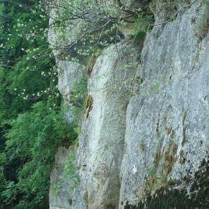 Image 8 - Jean-Pierre sergent, Water, Rocks, Trees & Flowers, 2015, JP Sergent