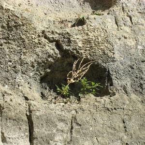 Image 80 - Jean-Pierre sergent, Water, Rocks, Trees & Flowers, 2015, JP Sergent
