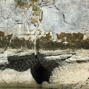 Image 71 - Jean-Pierre sergent, Water, Rocks, Trees & Flowers, 2015, JP Sergent
