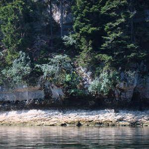 Image 38 - Jean-Pierre sergent, Water, Rocks, Trees & Flowers, 2015, JP Sergent