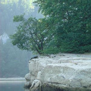 Image 98 - Jean-Pierre sergent, Water, Rocks, Trees & Flowers, 2015, JP Sergent