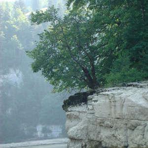 Image 92 - Jean-Pierre sergent, Water, Rocks, Trees & Flowers, 2015, JP Sergent
