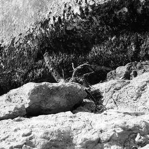 Image 149 - WATER, ROCKS, TREES & SKIES 2016, JP Sergent