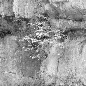 Image 110 - WATER, ROCKS, TREES & SKIES 2016, JP Sergent
