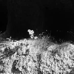 Image 120 - WATER, ROCKS, TREES & SKIES 2016, JP Sergent