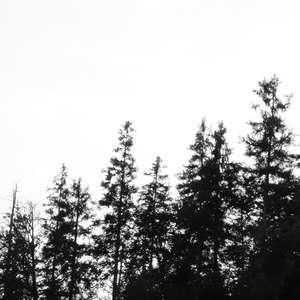 Image 189 - WATER, ROCKS, TREES & SKIES 2016, JP Sergent