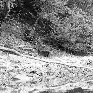 Image 220 - WATER, ROCKS, TREES & SKIES 2016, JP Sergent