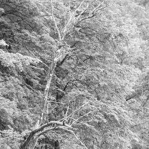 Image 214 - WATER, ROCKS, TREES & SKIES 2016, JP Sergent