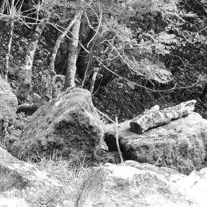 Image 215 - WATER, ROCKS, TREES & SKIES 2016, JP Sergent