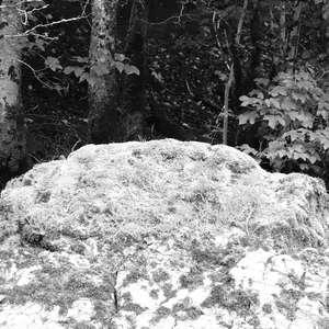 Image 206 - WATER, ROCKS, TREES & SKIES 2016, JP Sergent