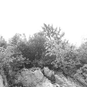 Image 249 - WATER, ROCKS, TREES & SKIES 2016, JP Sergent