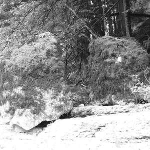 Image 227 - WATER, ROCKS, TREES & SKIES 2016, JP Sergent