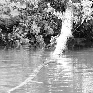 Image 14 - WATER, ROCKS, TREES & SKIES 2016, JP Sergent