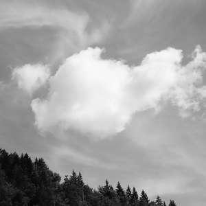 Image 12 - WATER, ROCKS, TREES & SKIES 2016, JP Sergent