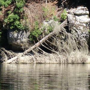 Image 372 - WATER, ROCKS, TREES & SKIES 2016, JP Sergent