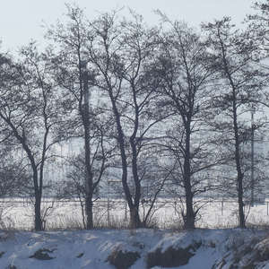 Image 130 - Trees into the Winter sunlight, JP Sergent