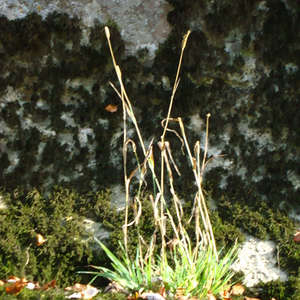 Image 161 - Jean-Pierre sergent, Water, Rocks, Trees & Flowers, April 2014, JP Sergent