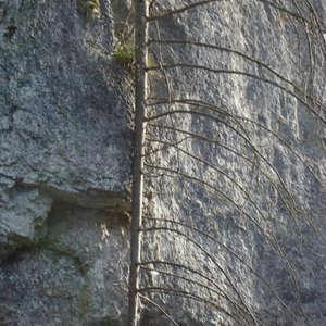 Image 164 - Jean-Pierre sergent, Water, Rocks, Trees & Flowers, April 2014, JP Sergent