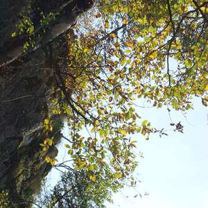 Image 163 - Jean-Pierre sergent, Water, Rocks, Trees & Flowers, April 2014, JP Sergent