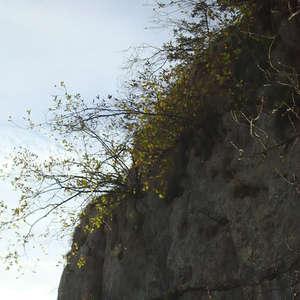 Image 169 - Jean-Pierre sergent, Water, Rocks, Trees & Flowers, April 2014, JP Sergent