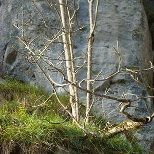 Image 175 - Jean-Pierre sergent, Water, Rocks, Trees & Flowers, April 2014, JP Sergent