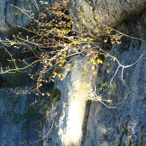 Image 141 - Jean-Pierre sergent, Water, Rocks, Trees & Flowers, April 2014, JP Sergent