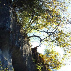 Image 143 - Jean-Pierre sergent, Water, Rocks, Trees & Flowers, April 2014, JP Sergent