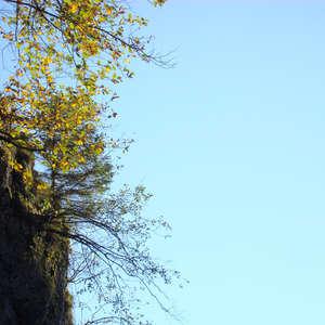 Image 147 - Jean-Pierre sergent, Water, Rocks, Trees & Flowers, April 2014, JP Sergent