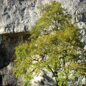 Image 150 - Jean-Pierre sergent, Water, Rocks, Trees & Flowers, April 2014, JP Sergent