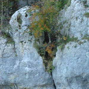 Image 154 - Jean-Pierre sergent, Water, Rocks, Trees & Flowers, April 2014, JP Sergent