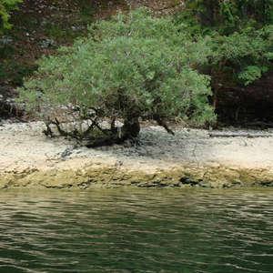 Image 289 - Jean-Pierre sergent, Water, Rocks, Trees & Flowers, April 2014, JP Sergent