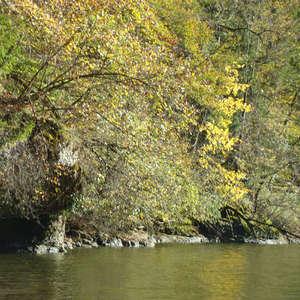 Image 184 - Jean-Pierre sergent, Water, Rocks, Trees & Flowers, April 2014, JP Sergent