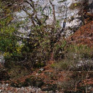 Image 186 - Jean-Pierre sergent, Water, Rocks, Trees & Flowers, April 2014, JP Sergent
