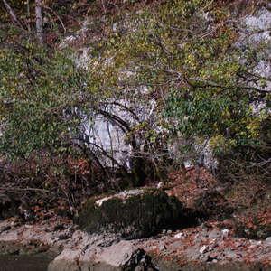 Image 187 - Jean-Pierre sergent, Water, Rocks, Trees & Flowers, April 2014, JP Sergent