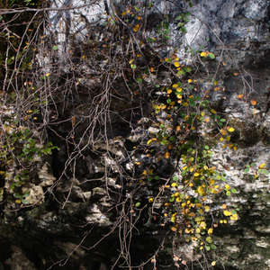 Image 199 - Jean-Pierre sergent, Water, Rocks, Trees & Flowers, April 2014, JP Sergent
