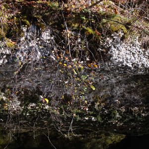 Image 198 - Jean-Pierre sergent, Water, Rocks, Trees & Flowers, April 2014, JP Sergent