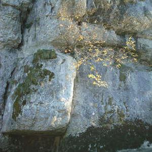 Image 203 - Jean-Pierre sergent, Water, Rocks, Trees & Flowers, April 2014, JP Sergent