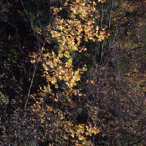 Image 202 - Jean-Pierre sergent, Water, Rocks, Trees & Flowers, April 2014, JP Sergent